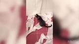 Приколы с кошками и котами 2018. Подборка смешных и интересных видео с котиками и кошечками
