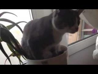 цветочный кош, или кот в горшке 3  Различные короткие видео ролики, приколы и др. @