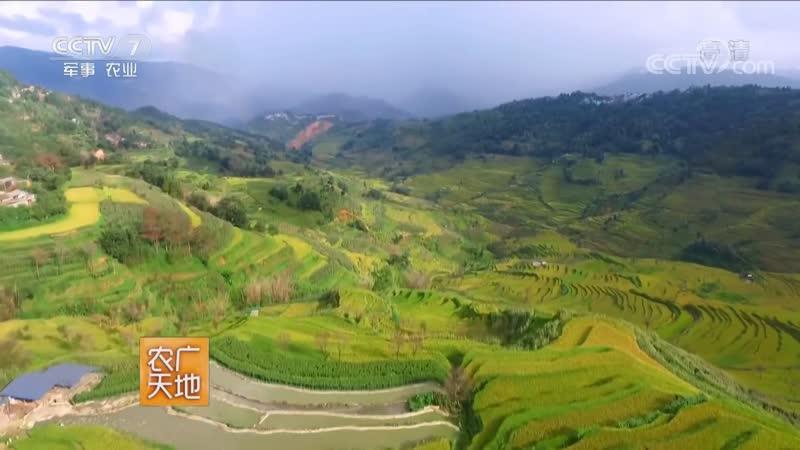 Пелена облаков на полях с уступами (террасы) ''ЮньХай ТиТянь''. Народность Хани: традиции, коды жизни, пароли вкуса и уникальные