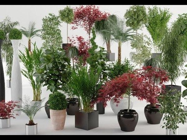 ТОП 10 лучших БЫСТРОРАСТУЩИХ комнатных растений