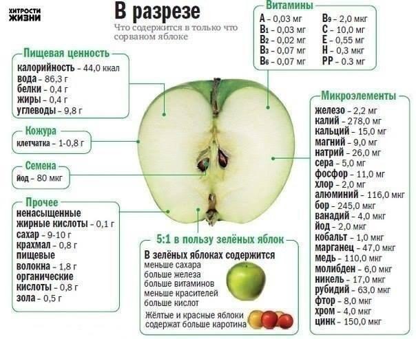 Яблоко замедляет процессы старения