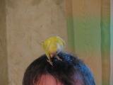 Пьяные песни с попугаем. 10 или 15 лет назад. Прикольно))))