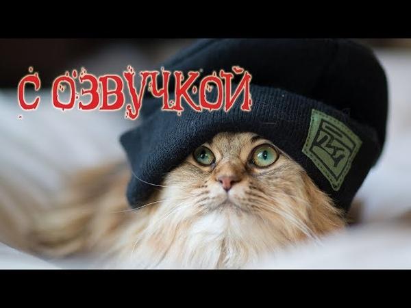 Приколы с котами – озвучка животных – Сборник кота Мурзика Полный ржач – Domi Show
