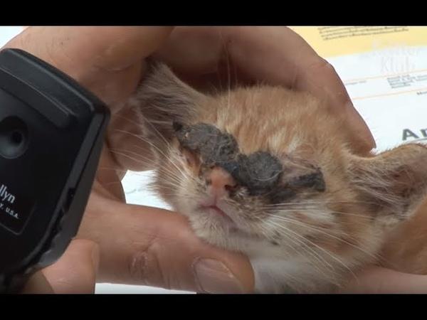 Слепой котенок впервые увидел свою маму Animal In Crisis EP22 SKorea