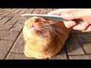 ねこじゃすりで撫でられる野良猫の表情に癒やされる。