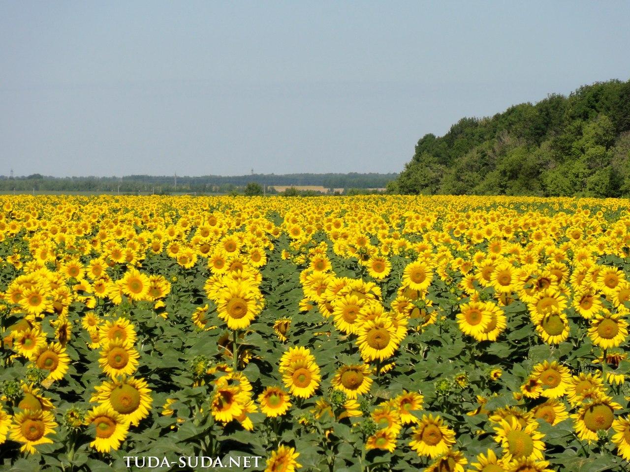 Дорога Пенза-Тамбов
