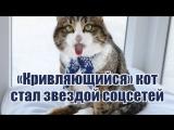 «Кривляющийся» кот стал звездой соцсетей