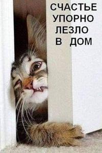 Алена Шутова