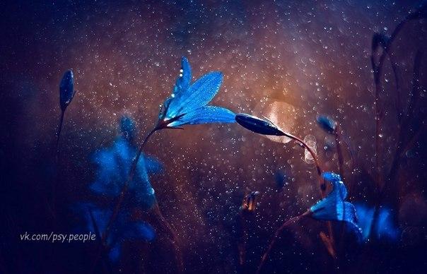 Никогда никого не вини! никогда ничего не бойся! на краю безнадежной любви ты присядь, отдышись, успокойся. никогда ни о чем не жалей, то что пройдено-все не за зря. без ошибок не стать нам мудрей, без синиц не поймать журавля. никогда не пугайся терять. знай, что лучшее ждет впереди. ну, а время не будет ждать, ты со временем в ногу иди! но и все ж никого не забудь, кто остался стоять на пути. как бы ни был извилист твой путь ты с него никогда не сходи. о подарках судьбу не проси, но на Бога…