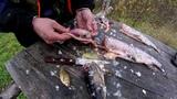 ловля щуки, осень 2018.. Рыбалка на кружки. Что, и как ,приготовить на природе? 1 часть.