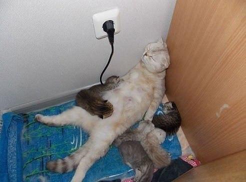 Все мамы устают одинаково!