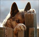 Бывает смотришь в глаза собаки, и думаешь — Человек!а иногда смотришь в глаза человека…