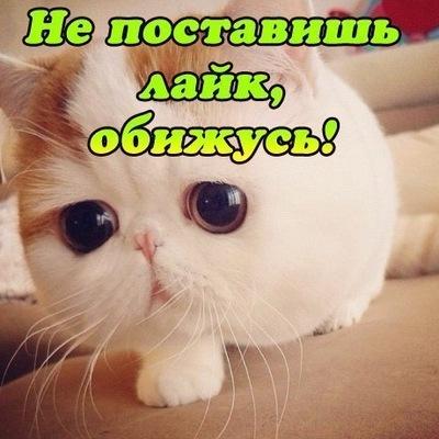 Лилия Сираева, 19 февраля 1998, Самара, id152856780