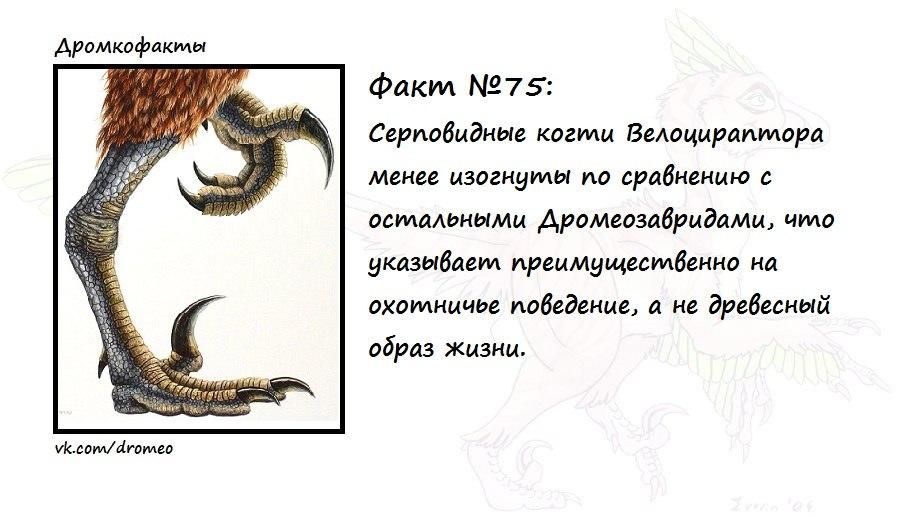 https://pp.vk.me/c621423/v621423874/d042/sDOfWy0G3pk.jpg