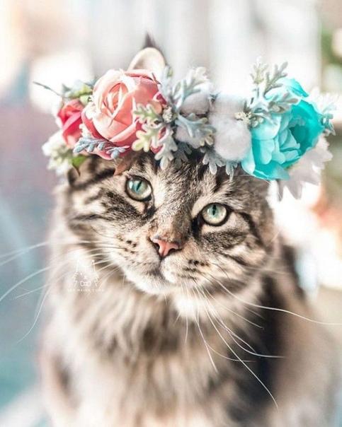 Животные в венках из цветов Цветочные венки остаются в тренде несколько лет к ряду. Юные модницы приходят в них на свадебные, праздничные торжества, фестивали. Однако, не одни красавицы