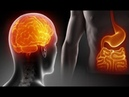 Researchers discover a Second Brain hidden in the human body