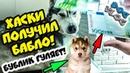 DOGVLOG ХАСКИ ПОЛУЧИЛ ПОСЫЛКУ С ДЕНЬГАМИ Выполняю ЗАДАНИЯ ПОДПИСЧИКОВ Говорящая собака