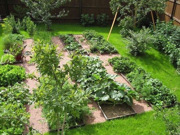 Дрожжевые подкормки полезны для всех овощных культур, земляники, цветов. Отлично зарекомендовало себя применение дрожжевого раствора и в качестве внекорневой подкормки.