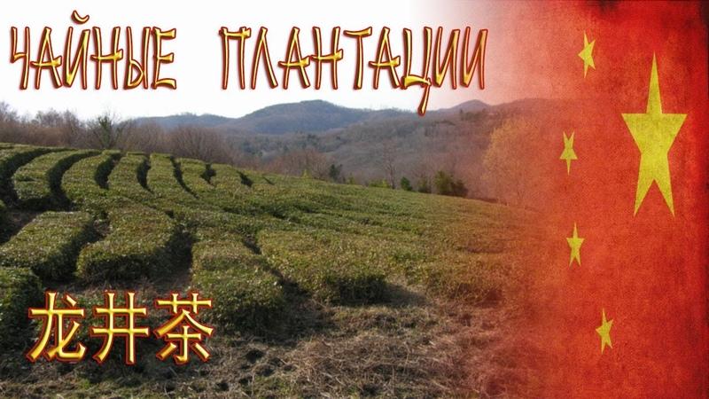 Чайные плантации зимой / Tea fields / 龙井茶