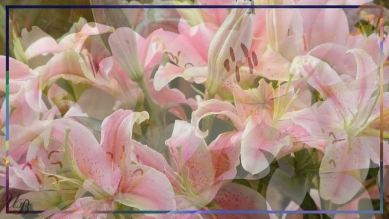 С Днем рождения Лилия Красивая видео открытка