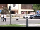 Дисциплинированный щенок в Шымкенте соблюдает правила дорожного движения