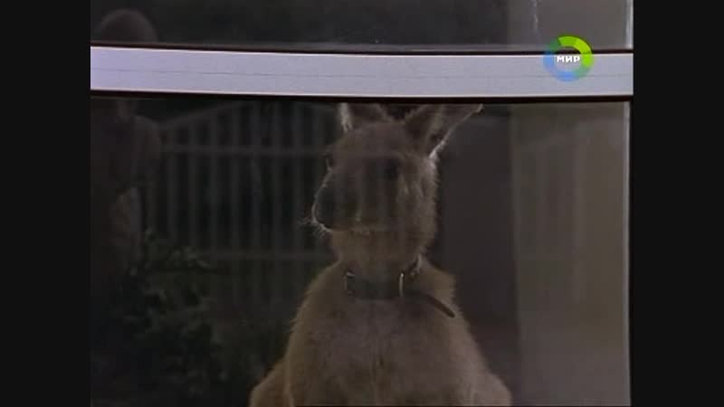 Приключения кенгуренка Скиппи - серия 38 Skippy and the Millionairess
