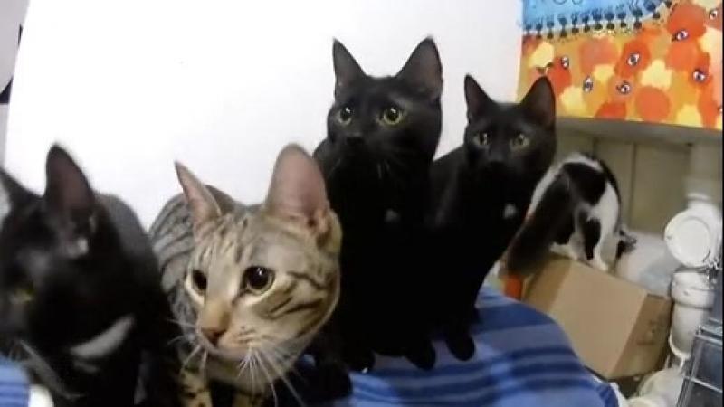 Кошачьи мордашки =) Мини-приют