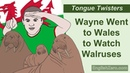 Tongue Twister 12- Wayne Went to Wales to Watch Walruses