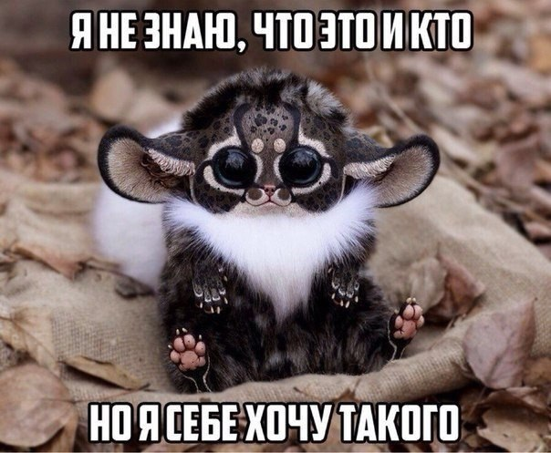 http://cs543104.vk.me/v543104344/118df/sQ3ZZYolM3c.jpg