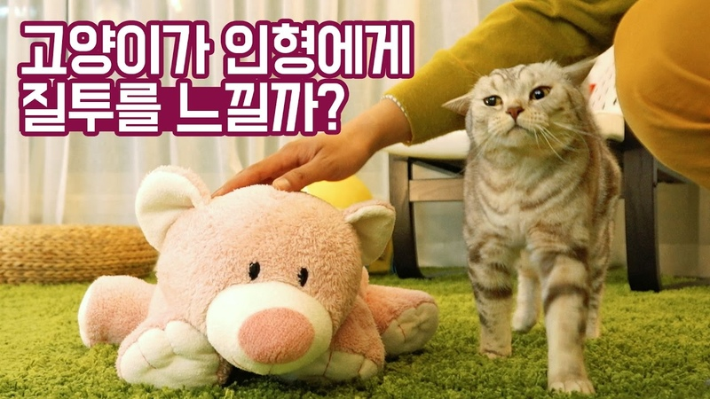 고양이가 인형에게 질투를 느낄까? [탐묘생활]