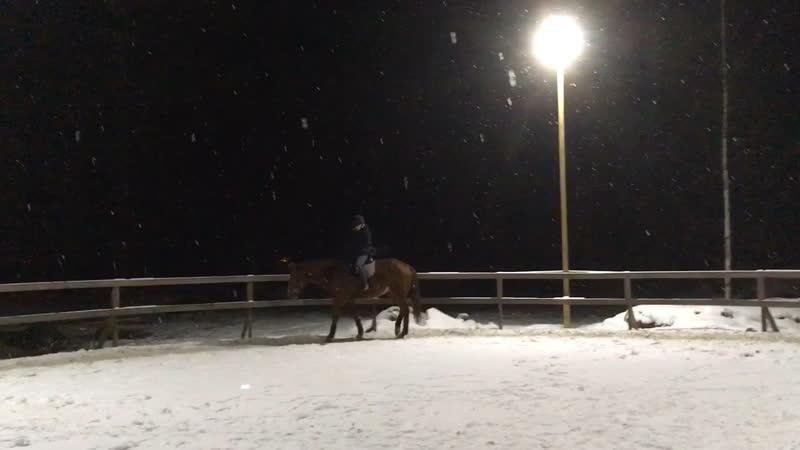 Ночь, улица, фонарь, лошадка.