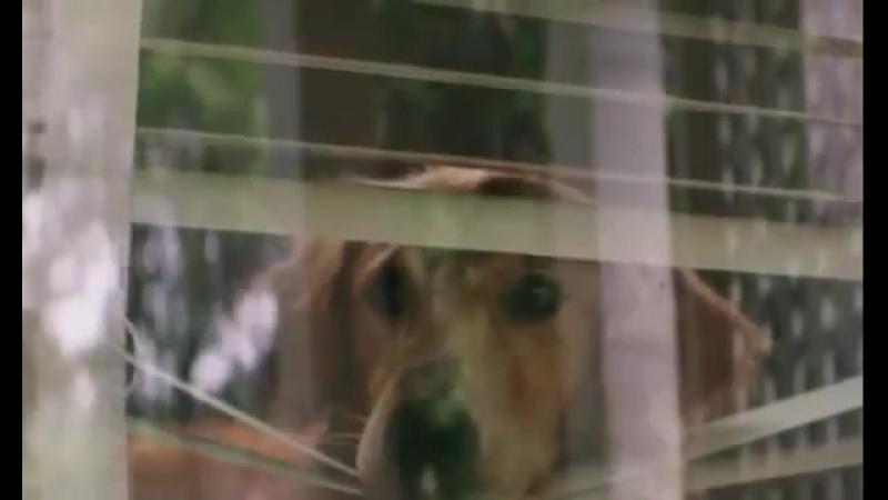 Собачья жизнь 2017 Фильм про собаку