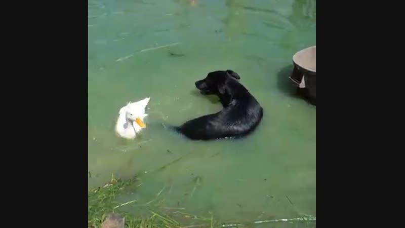 L'amitié entre différents animaux