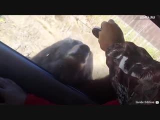 Пикник на обочине с медведем