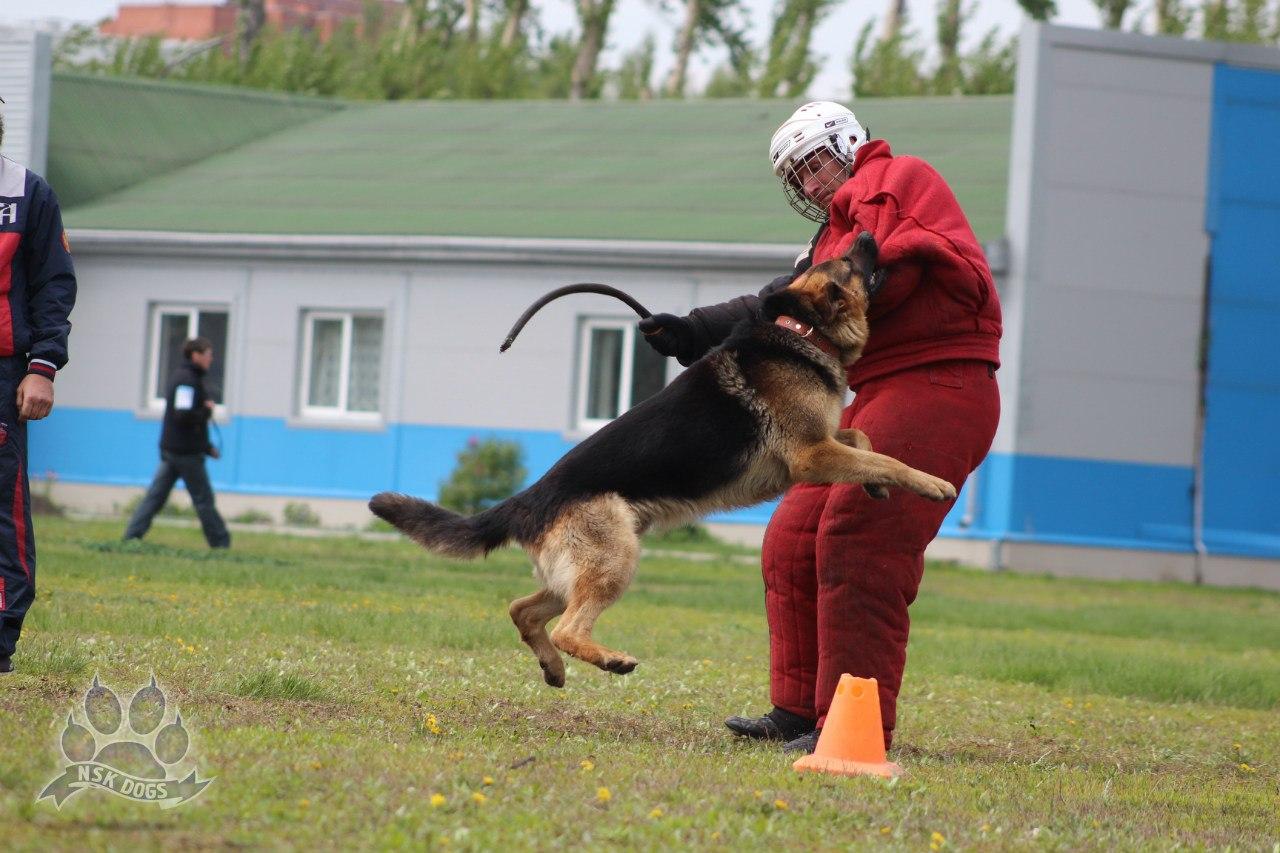 Русский ринг 24.05.14 Новосибирск MtQZywHnvzQ