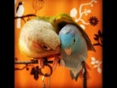 The Story of A Parrotlet Conure Friendship