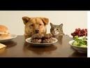 ПОПРОБУЙ НЕ ЗАСМЕЯТЬСЯ - Смешные Приколы с Животными до слез, смешные коты, funny cats 98