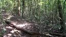 Parque Florestal Municipal Eurico Figueiredo - Conselheiro Lafaiete - MG - Parte 3 [HD]