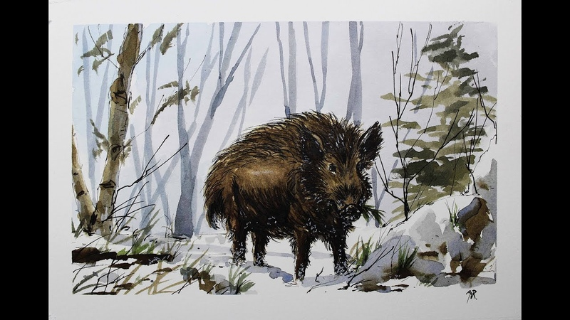 Sketching wild Boar in winter scene watercolor line and wash with Nil Rocha
