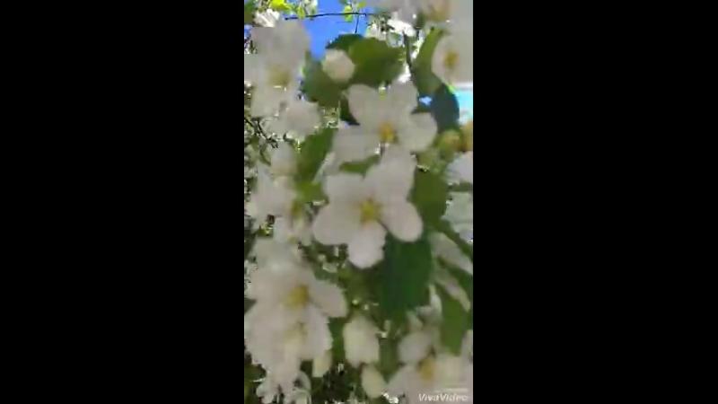 Все цветет