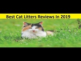 Top 3 Best Cat Litters Reviews In 2019