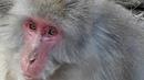 Япония Киото Арасияма с обезьянами Полная версия Japan Kyoto Arashiyama with version