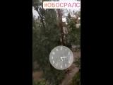 VID_41670322_154725_262.mp4