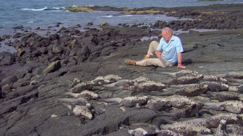 BBC | Аттенборо. 60 лет с дикой природой: Жизнь в объективе камеры [1/3]