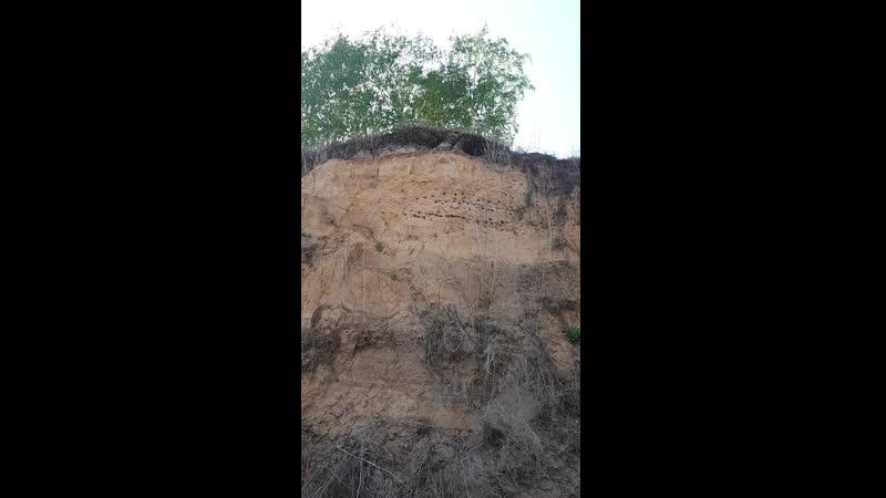 Вот на таких склонах любят жить ласточки Живут они на склонах ради безопасности гнезд и птенцов Однако змеи частые их гости