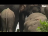 В Индии сотни слонов пришли почтить память своего погибшего вожака