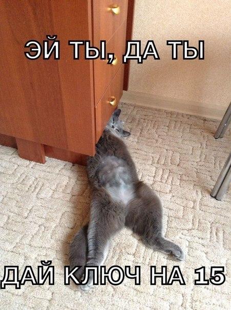 Кошачий юмор - Страница 4 6Z6v0YnR5VM