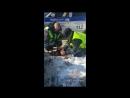 Сотрудники Госавтоинспекции спасли пострадавшую собаку
