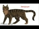 Коты Воители - Обитатели Сумрачного леса 1 часть