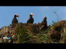 Животный мир Командорского архипелага RTGHD